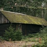photo shows an old mossy cabin in the brush