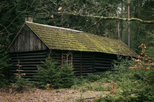 Haunted Cades Cove: The Cussing Cover - Photo